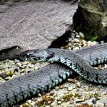 La Serpiente y los signos de agua