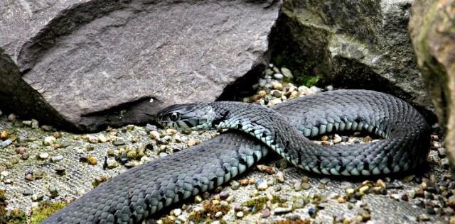 serpiente-signos-agua